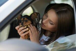 Woman dog car traveling