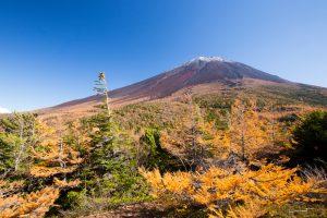 奥庭から見た富士山