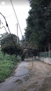 Nさんの家のある住宅地までアクセスする2本の道のうち1本は、倒木と垂れ下がった電線で、クルマはもちろん、歩いて通過するのも大変に危険な状態だった。Nさん撮影。