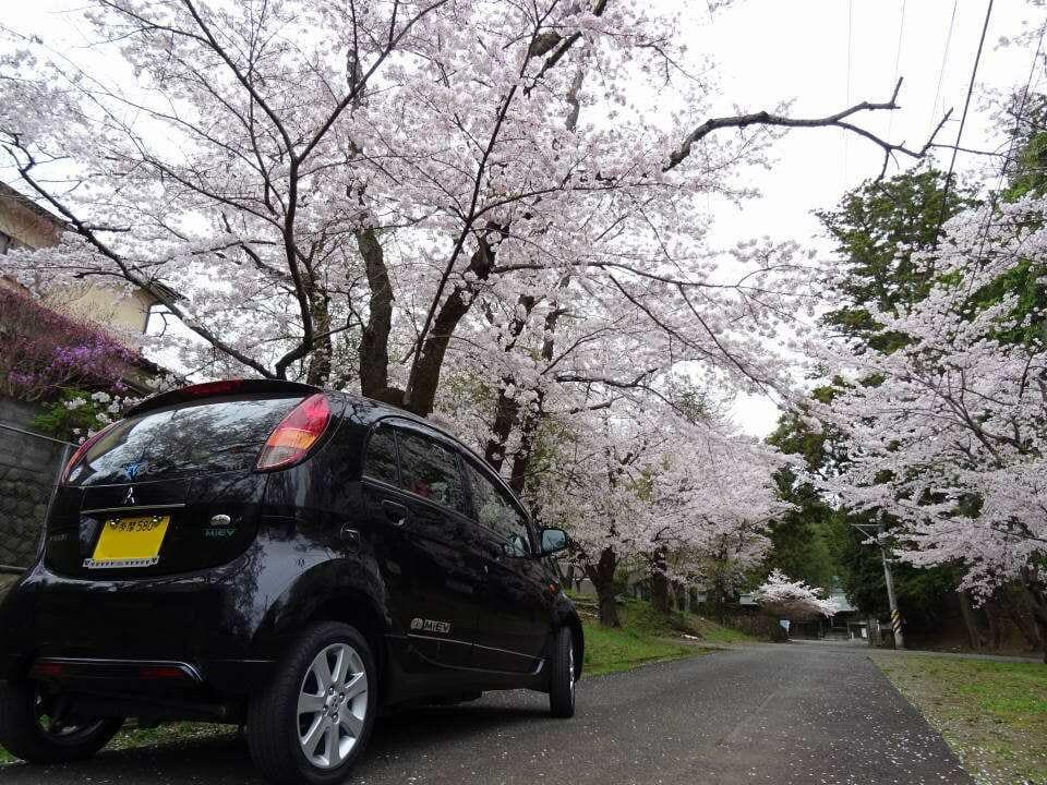 満開の桜の下で。